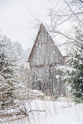 Photograph - Snowing On The Farm by Cheryl Baxter