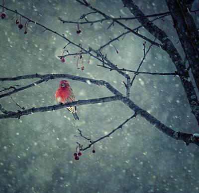 Snowfall Wall Art - Photograph - Snowing by Yu Cheng