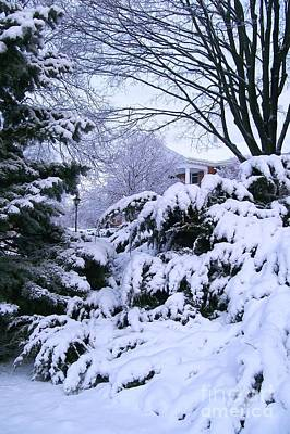 Snowmageddon Photograph - Snowmageddon 2014 by Laurie Eve Loftin