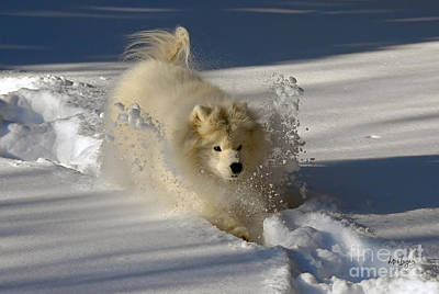 Dog In Snow Photograph - Snowplow by Lois Bryan