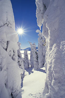 Snowscape Snow Covered Trees And Bright Sun Art Print