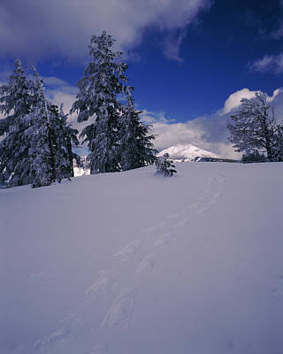 Snowshoe Tracks On Snow, Mt. Scott Art Print by Panoramic Images