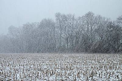Landscape Photograph - Snowstorm And Cornfield by Steven Richman