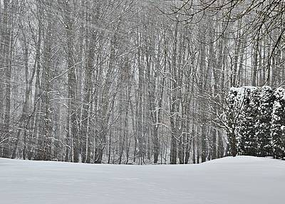 New Jersey Photograph - Snowstorm And Woods by Steven Richman