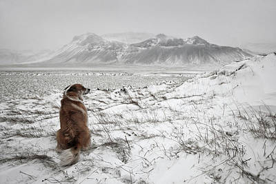 Cold Photograph - Snowstorm by Bragi Ingibergsson -