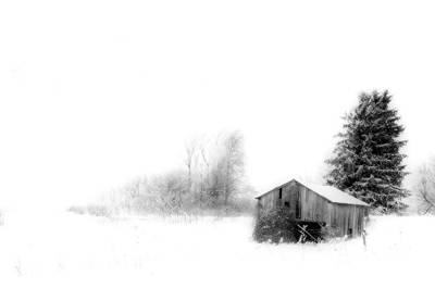 Photograph - Snowy Abandon by Emily Stauring