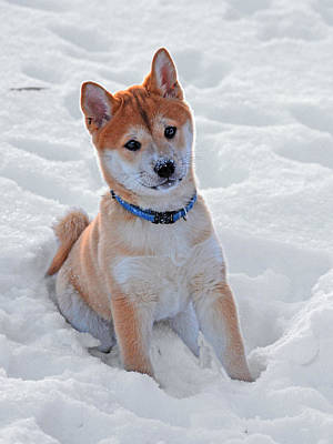 Photograph - Snowy Adorable by Emily Stauring