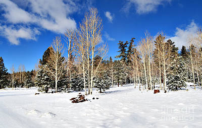 Photograph - Snowy Aspen Grove by Donna Greene