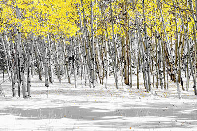 Snowy Aspen Landscape Art Print by The Forests Edge Photography - Diane Sandoval