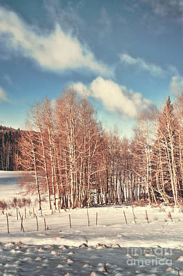 Photograph - Snowy Aspens  by Donna Greene