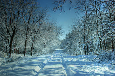 Photograph - Snowy Backroad by Thomas Danilovich