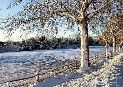 Photograph - Snowy Bay Circuit Trail Duxbury Ma by Janice Drew