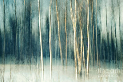 Snowy Birch Grove Art Print by Priska Wettstein