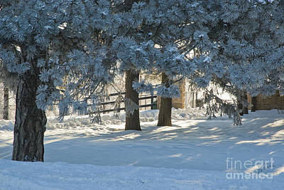 Snowy Blue Pines Art Print