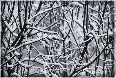 Snowy Branches Art Print by Birgit Tyrrell