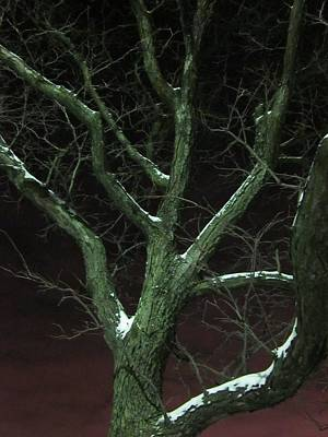 Photograph - Snowy Branches by Guy Ricketts