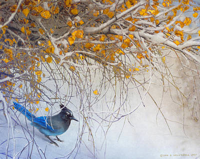 . Bird. Stellar Jay. Winter. Snow Painting - Snowy Branches Stellar Jay by R christopher Vest