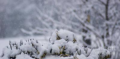 Snowy Art Print by Carol Lynch