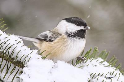 Photograph - Snowy Chickadee by Peg Runyan