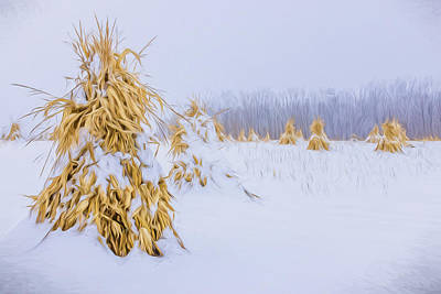 Photograph - Snowy Corn Shocks - Artistic by Chris Bordeleau