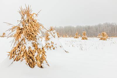 Photograph - Snowy Corn Shocks by Chris Bordeleau