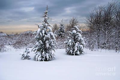 Snowy Dawn Print by Deborah  Bowie
