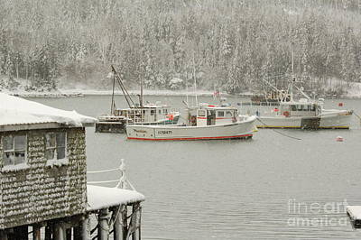 Photograph - Snowy Day by Alana Ranney