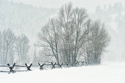 Snowy Day In The Tetons Print by Sandra Bronstein
