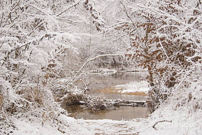 Photograph - Snowy Day by Reva Dow