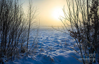 Photograph - Snowy Dream by Ismo Raisanen