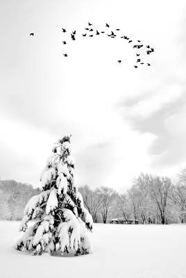 Photograph - Snowy Dreams by Emily Stauring