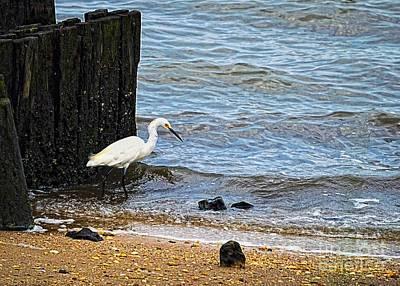 Snowy Egret At The Shore Art Print