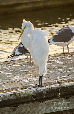 Photograph - Snowy Egret by Deborah Smolinske