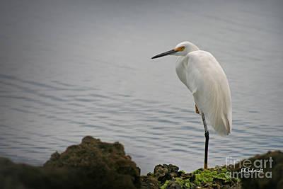 Photograph - Snowy Egret by E B Schmidt