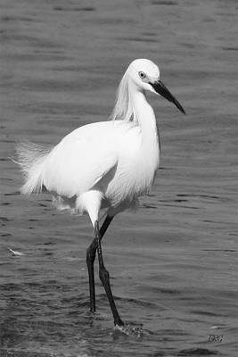 Photograph - Snowy Egret In Black And White by Ben and Raisa Gertsberg
