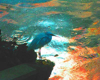 Photograph - Snowy Egret In Blue by Patricia Januszkiewicz