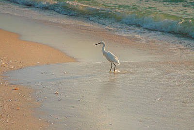 Snowy Egret In Surf II Print by Steven Ainsworth