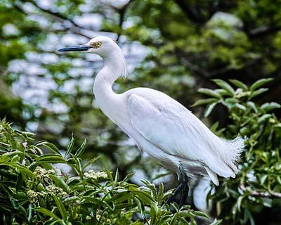 Snowy Egret In Trees Art Print