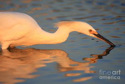 Snowy Egret Mirror Art Print