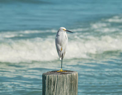 Snowy Egret - Naples Beach Art Print by Kim Hojnacki