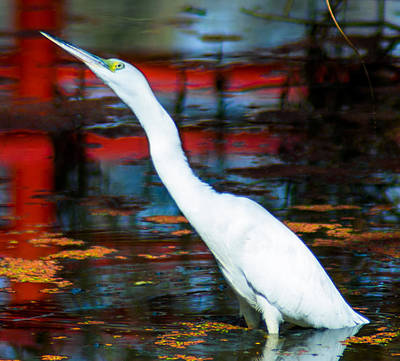 Listening Digital Art - Snowy Egret  by Optical Playground By MP Ray