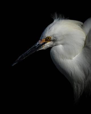 Photograph - Snowy Egret Portrait 3 by Ernie Echols