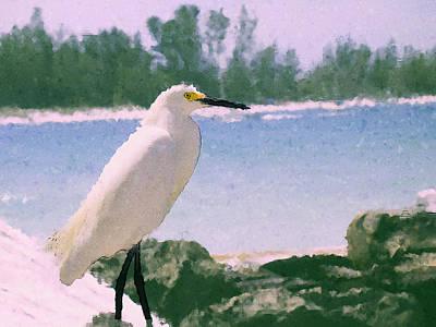 Sarasota Digital Art - Snowy Egret by Ryan Burton