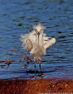 Snowy Egret With Yellow Feet Art Print by Tom Janca