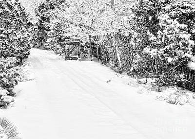 Pinion Photograph - Snowy Entrance by Roselynne Broussard