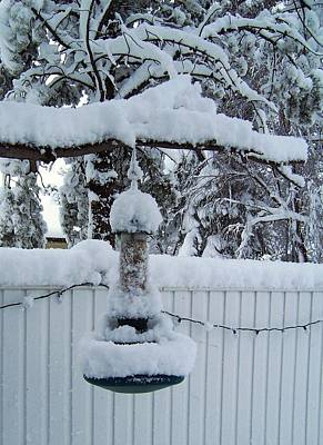 Photograph - Snowy Feeder by Sheila Byers
