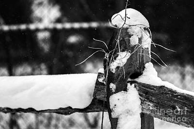 Photograph - Snowy Fencepost by JT Lewis