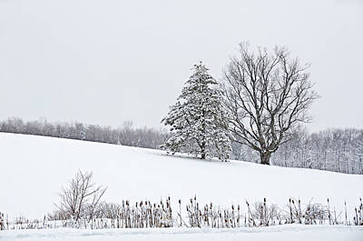 Snowstorm Photograph - Snowy Field by Donna Doherty