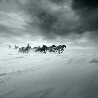 Horse Run Photograph - Snowy Field by Shu-guang Yang