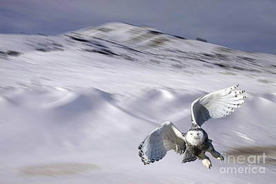 Photograph - Snowy Flight by Charlene  Aycock